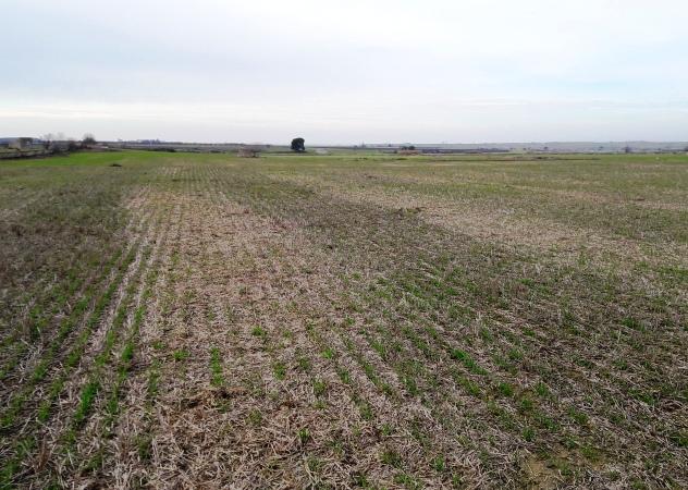 L'intens fred hivernal del gener, pot haver provocat danys als cereals?