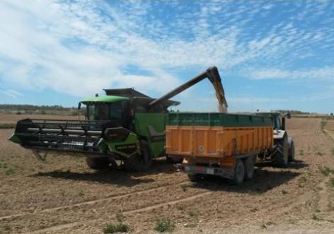 Quins són els principals paràmetres que determinen la qualitat del blat tou?