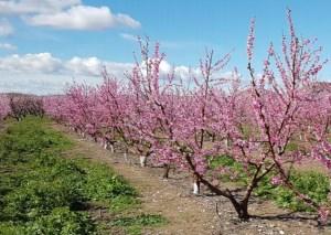 Enfocaments de la fertilització nitrogenada