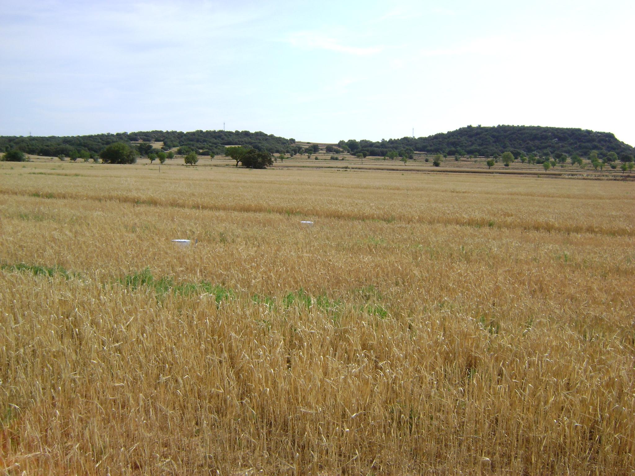 Optimitzar l'eficiència productiva per la reducció de gasos d'efecte hivernacle en cultius extensius