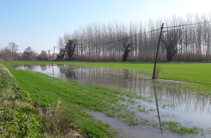 Les pluges abundants i extenses de finals de gener podrien afectar a la naixença