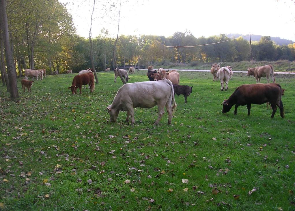 Pastures: En quin moment cal aplicar N a sortida d'hivern?