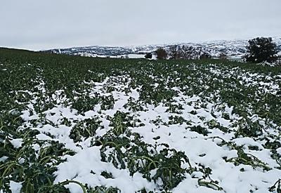 Nevades a cotes baixes a l'interior de Catalunya