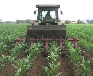 Adobar el blat de moro en cobertora