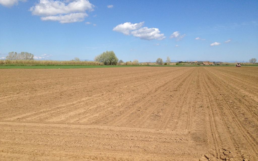 Control de males herbes del blat de moro en pre-emergència