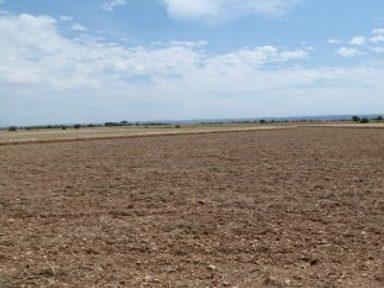Herbicides de pre-emergència en cereals d'hivern