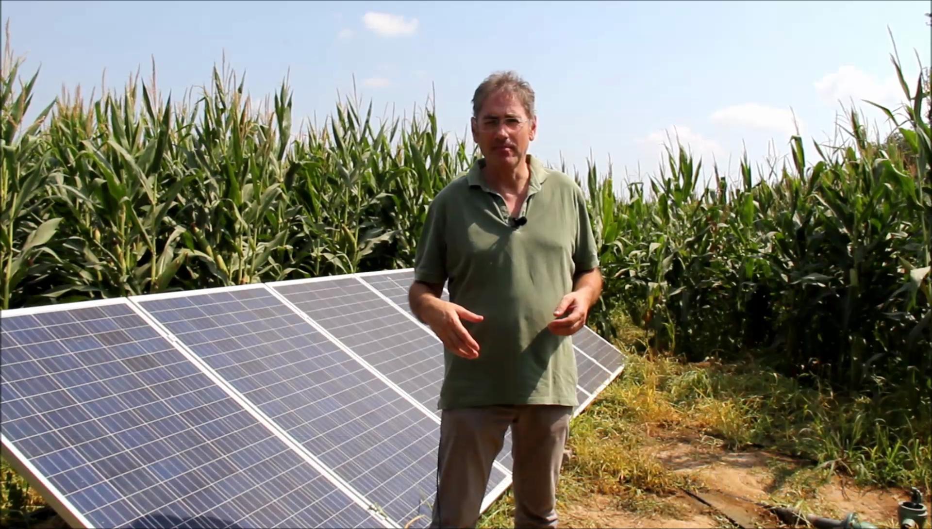 Reg solar en el cultiu de blat de moro