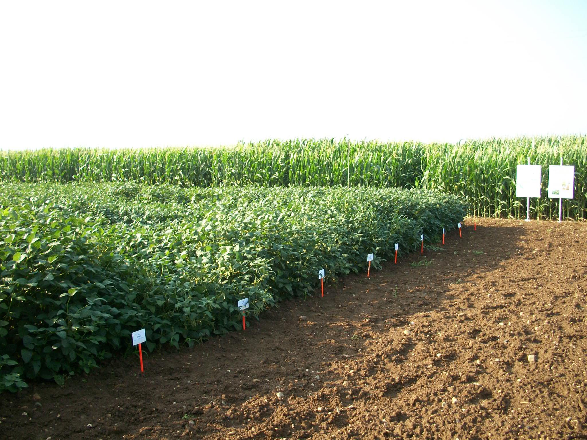 El cultiu de la soja, un conreu alternatiu