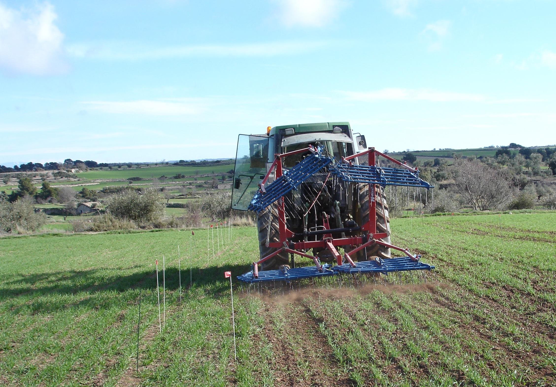 Eficàcia i selectivitat de la rascla de pues en el control de males herbes en cereal d'hivern