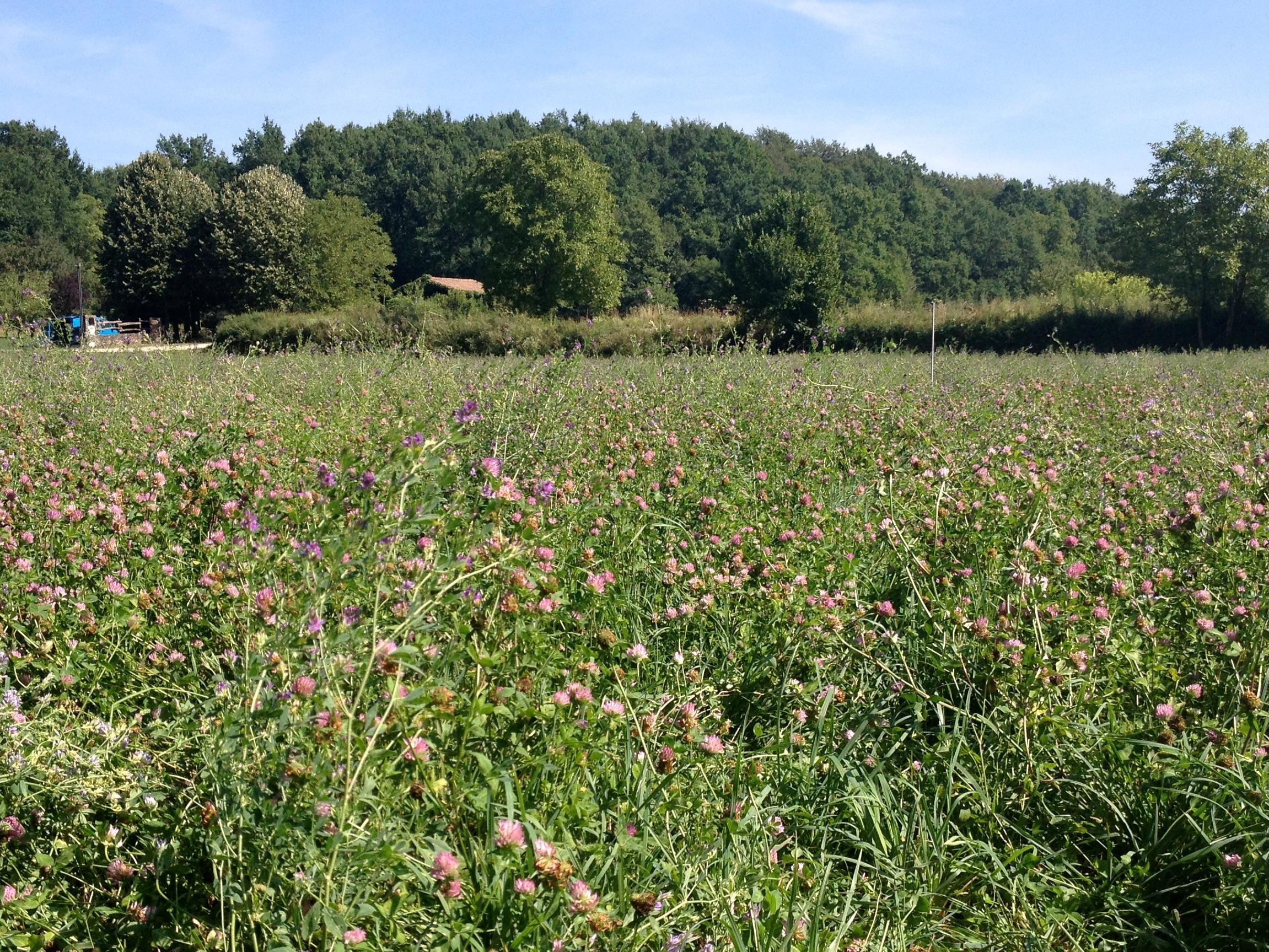 El moment òptim per aplicar nitrogen mineral a sortida d'hivern en pastures s'endarrereix a causa de les temperatures baixes